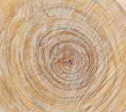 Wooden texture. Wooden background. Tree texture. Tree background. Old rough wood texture. Wooden texture. Wooden background. Tree texture. Tree background royalty free stock photography