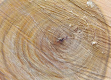 Wooden texture. Wooden background. Tree texture. Tree background. Old rough wood texture. Wooden texture. Wooden background. Tree texture. Tree background stock images