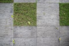 Wooden tile floor. With grass Stock Photos