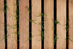Wooden tile on green grass for background and design art work.  royalty free stock images