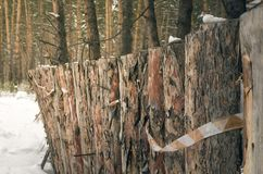 Wooden timber fence made of pine logs background. Wooden timber fence made of pine logs in winter forest background. Construction site. Fence on the backyard of royalty free stock images