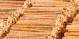 Wooden timber logs Stock Photo