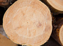 Wooden timber at a sawmill Royalty Free Stock Photo