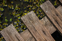 Wooden tiny Bridge over swamp Royalty Free Stock Image