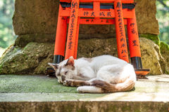 Wooden Torii Gates and cat Stock Photo