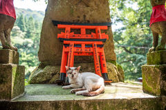 Wooden Torii Gates and cat Stock Photos