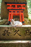 Wooden Torii Gates and cat Royalty Free Stock Photos