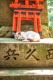 Wooden Torii Gates and cat Royalty Free Stock Photography