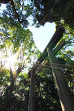 The wooden Torii and the sun. The wooden tori in Meiji jingumae shrine Royalty Free Stock Image