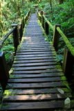 Wooden track under shade and cover with moss Royalty Free Stock Image