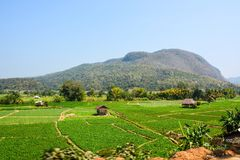 Wooden traditional house on vegetables plot with landscape mountains view. At Chiang Rai, Thailand Stock Photos