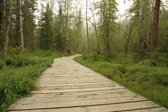 Wooden trail. In rain-forest Royalty Free Stock Photography