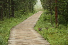 Wooden trail. In rain-forest Stock Images