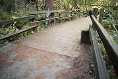 Wooden trail. Trail in the woods with wooden Bridge Royalty Free Stock Photos