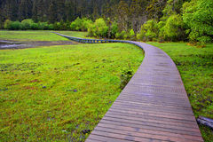 Wooden trail Stock Image
