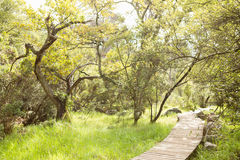 Wooden trail across countryside Stock Images