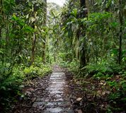 Wooden trail in the Amazon rain forest of Colombia royalty free stock images