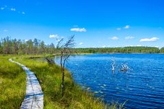 Wooden trail around the lake in a forest Stock Images