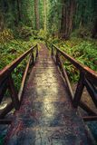 Wooden Trail Bridge Royalty Free Stock Image