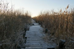 Wooden trail Royalty Free Stock Photo