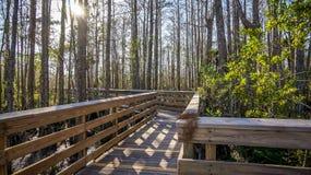 boardwalk in the wetlands Stock Photos
