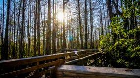 boardwalk in the wetlands Royalty Free Stock Photo