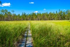 Wooden trail among green grass Stock Images