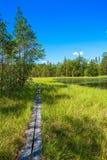 Wooden trail among green grass Stock Photos