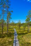 Wooden trail among green grass Stock Image