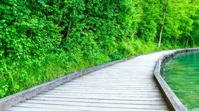 Wooden trail by lake Stock Photography