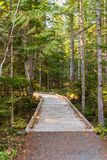 Wooden trail next to the visitor center of North Cascades, surrounded by trees stock images