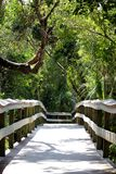 Wooden trail over samp in Everglades Nationalpark royalty free stock photo