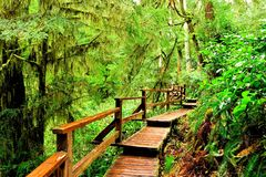 Wooden trail through the rainforest of Pacific Rim National Park, Vancouver Island Royalty Free Stock Photography