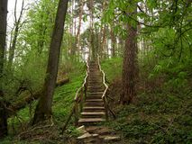 Wooden trail Royalty Free Stock Image