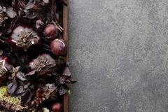 Wooden tray with purple vegetables and herbs. On stone textured background Stock Photo
