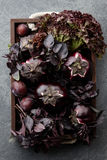 Wooden tray with purple vegetables and herbs. On stone textured background Stock Photos
