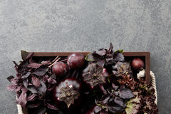 Wooden tray with purple vegetables and herbs. On stone textured background Stock Images