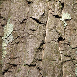 Wooden Tree Bark Background Texture Stock Photos