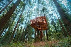 Wooden tree house in forest. Wooden tree house in the forest stock photography