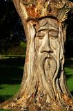 Wooden tree sculpture. In Cardiff park, face of old man stock photo