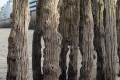 Wooden trees. Wooden trees in ocean Atlantic Stock Photos