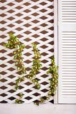 Wooden trellis facade wall with young weaving ivy plant Stock Photo