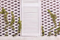 Wooden trellis facade wall with young weaving ivy plant Royalty Free Stock Photo