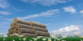 Wooden trunk sections on green grass Royalty Free Stock Image
