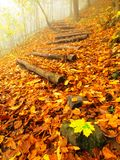 Wooden trunk steps in autumn colorful  forest, tourist footpath. Royalty Free Stock Photo