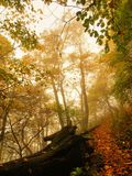 Wooden trunk steps in autumn colorful  forest, tourist footpath. Royalty Free Stock Images