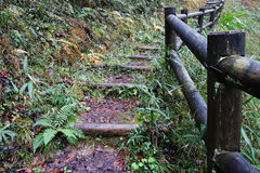 Wooden trunk steps in autumn forest Stock Image