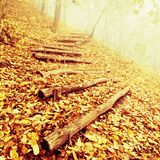 Wooden trunk steps in autumn forest, tourist footpath. Colorful autumn park. Royalty Free Stock Photography