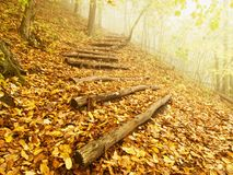 Wooden trunk steps in autumn forest, tourist footpath. Colorful autumn park. Royalty Free Stock Images