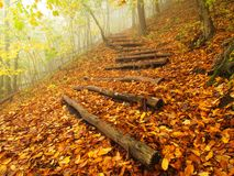 Wooden trunk steps in colorful autumn forest, tourist footpath. Stock Photography
